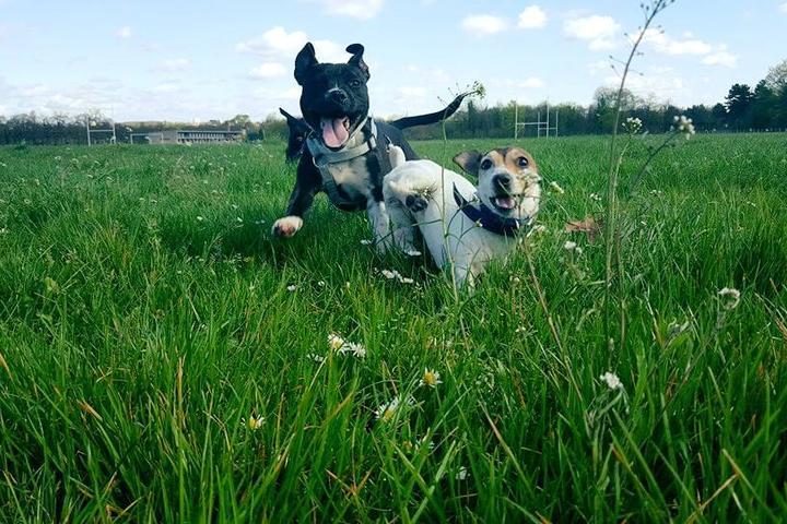Pet Friendly Social Dog