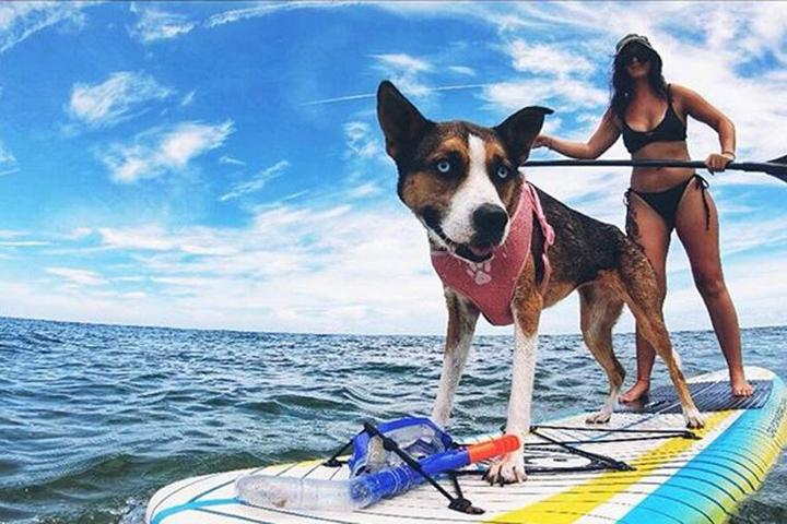 Pet Friendly Salty Dog Paddle