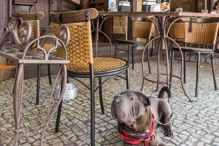 Pet Friendly Cafeina