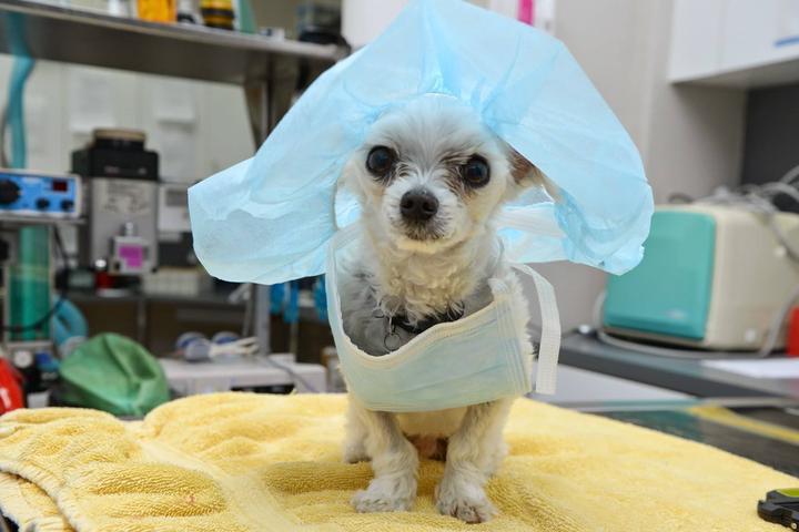 Pet Friendly Rancho Sequoia Veterinary Hospital