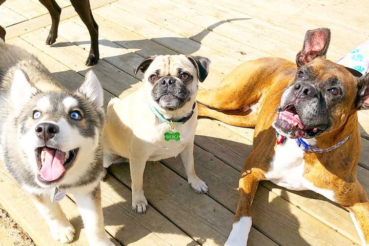 Pet Friendly Fur Ball Society