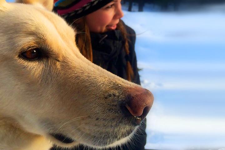 Pet Friendly Banff Veterinary Services
