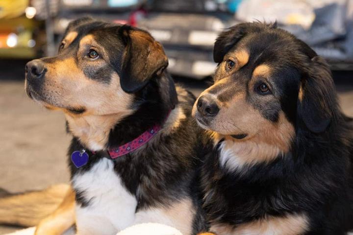 Pet Friendly Veronica's Dog Grooming