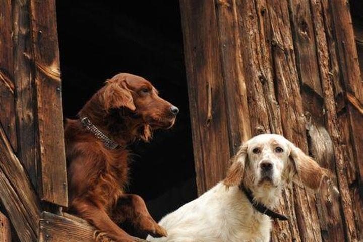 Pet Friendly Patience Inspired Dog Training