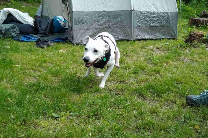 Pet Friendly Clarence Fahnestock State Park
