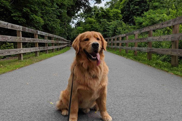 Pet Friendly Cochituate Brook Reservation Trail