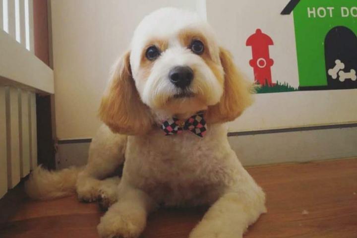 Pet Friendly Puppuccino Pet Spa