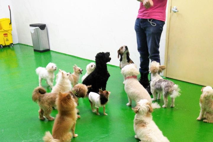 Pet Friendly NY Puppy Club