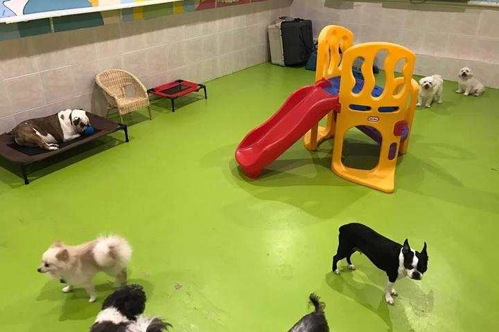Pet Friendly NY Puppy Club 191st Branch