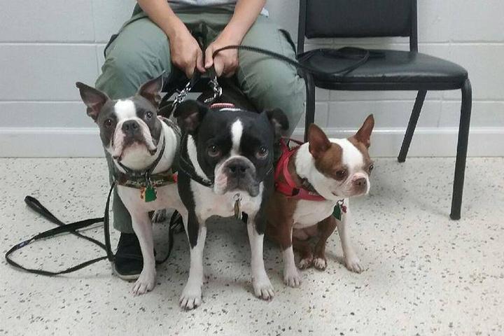 Pet Friendly Liberty Veterinary Medical Center