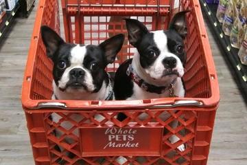 Directory Of Pet Stores In Aransas Pass Tx Bringfido