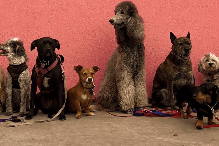 Pet Friendly Pet Heroes Dog Grooming Northeast