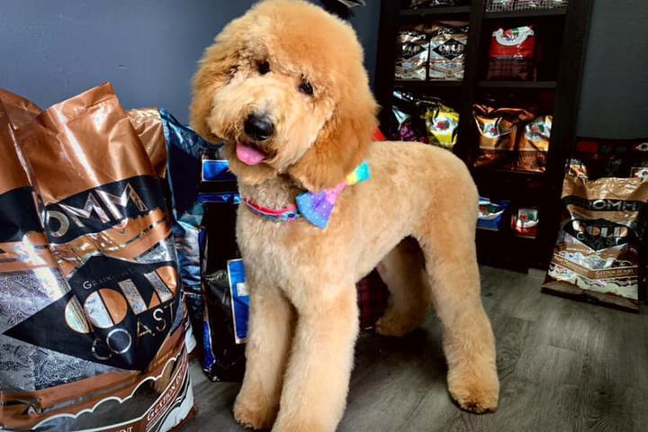 Pet Friendly Royal Pets Grooming Spa