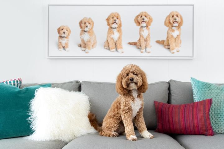 Pet Friendly Sarah Beth Photography, LLC