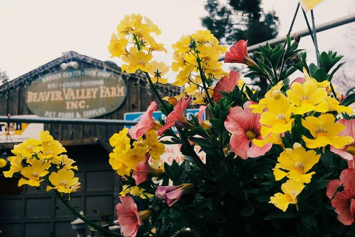 Pet Friendly Beaver Valley Farm & Country Store