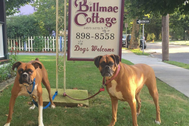 Dog Friendly Billmae Cottage Pet Policy