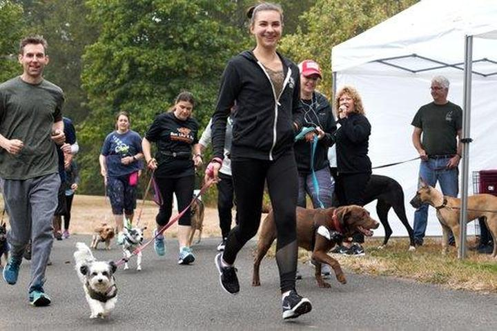 Pet Friendly Barkfest & Rover Romp