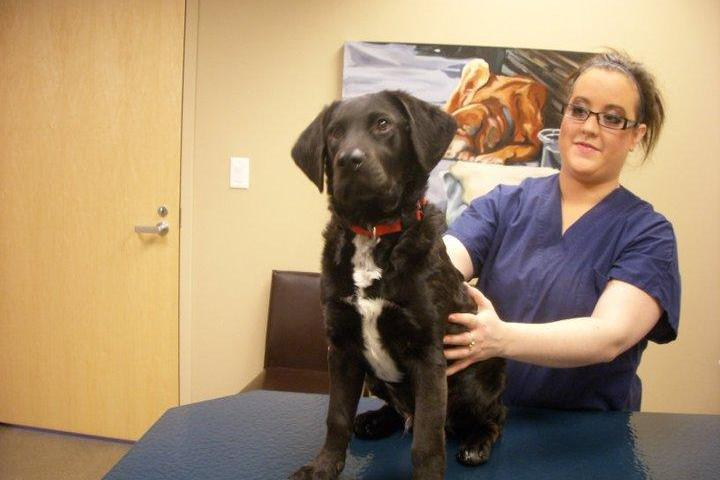 Pet Friendly Vet Partners Vet Hospital