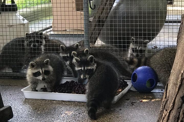 Pet Friendly Wisconsin Humane Society Wildlife Rehabilitation Center