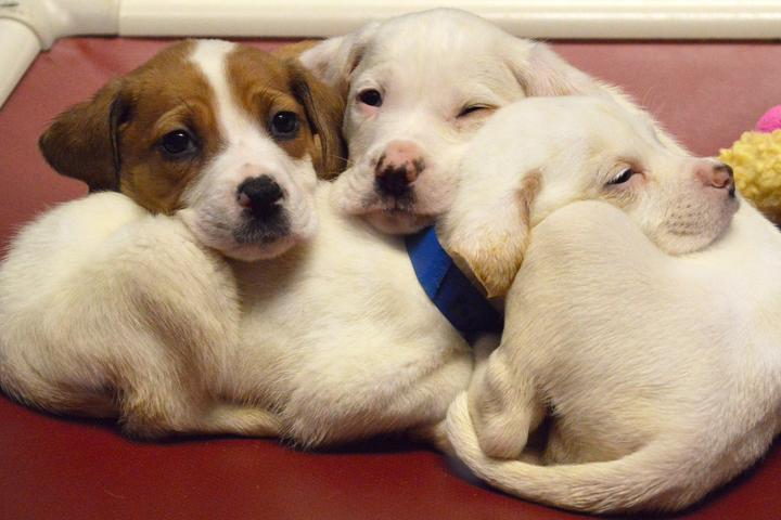 Pet Friendly Wisconsin Humane Society Ozaukee Campus