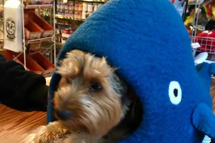 Pet Friendly Woofstock Companion Animal Supply