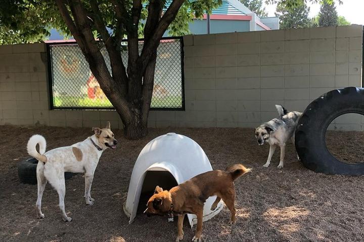 Pet Friendly The Bark Club