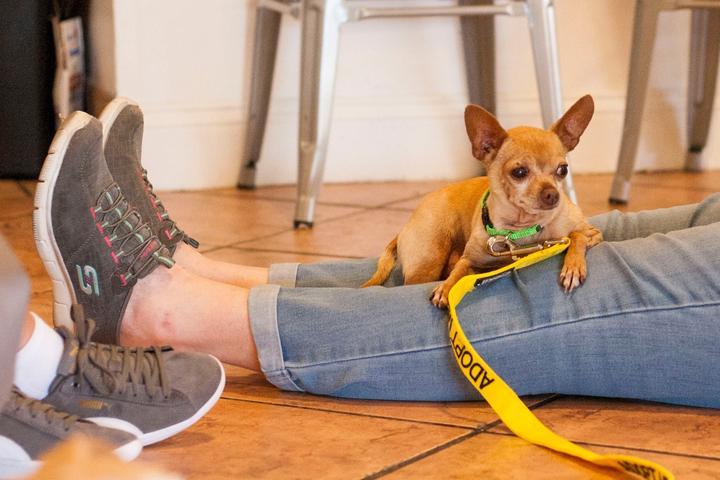 Pet Friendly Pup Plaza