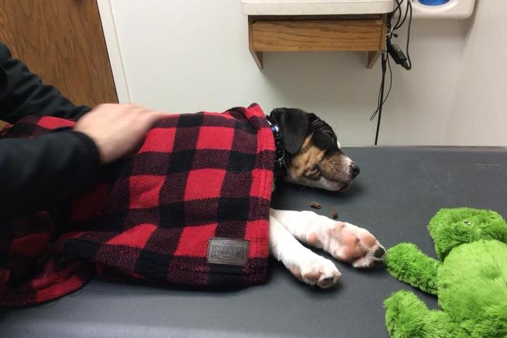 Pet Friendly North Shore Animal Hospital