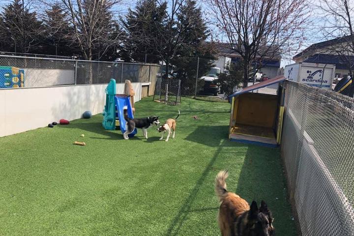 Pet Friendly Noah's Ark Veterinary & Boarding Resort