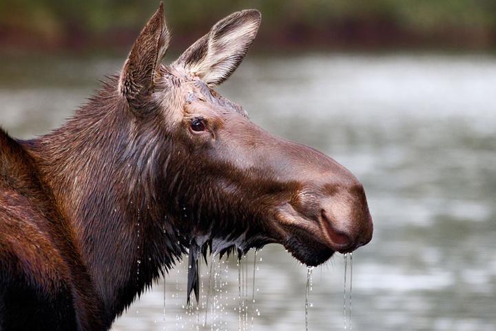 Pet Friendly Parc National de la Jacques-Cartier