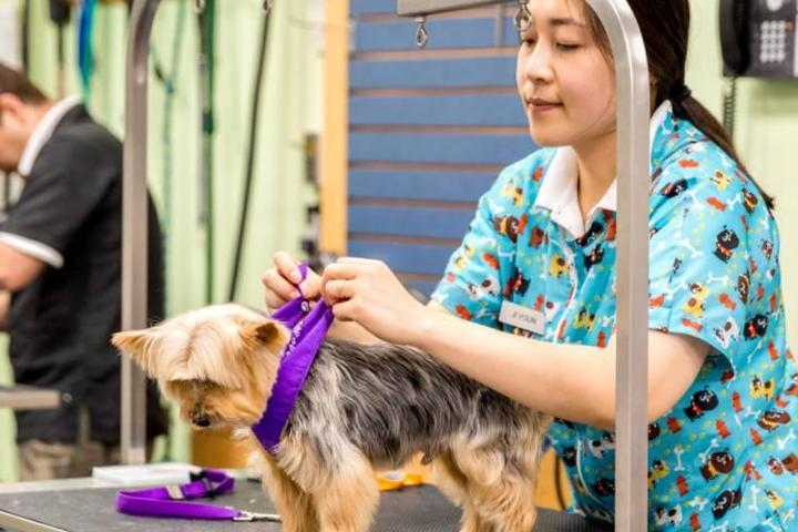 Pet Friendly Brookline Grooming and Pet Supplies