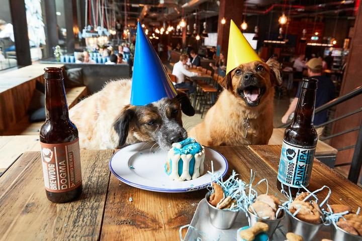 Pet Friendly Woof Pawty Planning