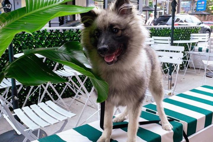 Pet Friendly Le Albert Cafe