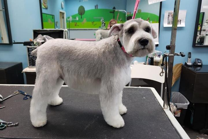 Pet Friendly Canine Carousel Pet Supply and Salon
