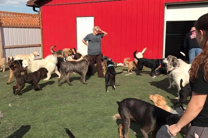 Pet Friendly Carm's Dog House