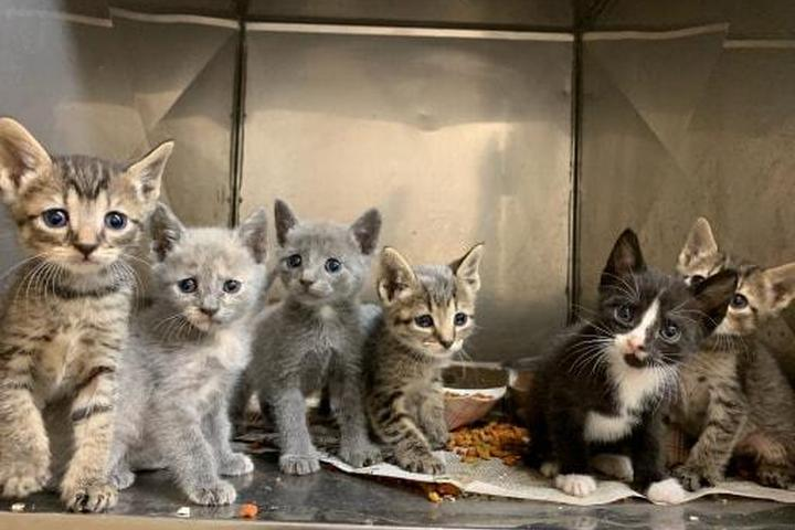 Pet Friendly Union County Animal Shelter