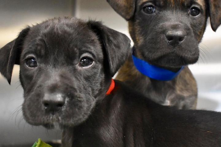 Pet Friendly Greenville Humane Society