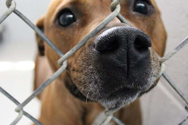 Pet Friendly Anson County Animal Shelter