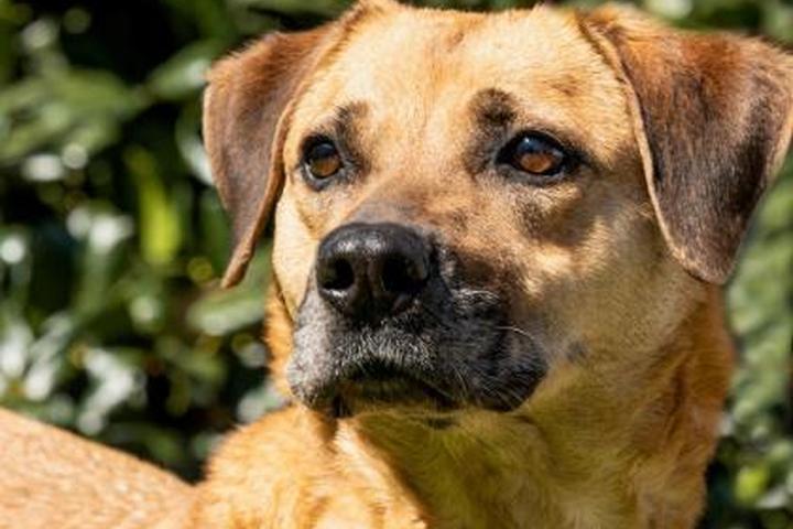 Pet Friendly Spartanburg Humane Society