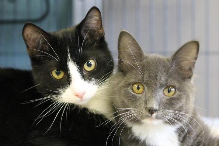 Pet Friendly Lifeline Fulton County Animal Services