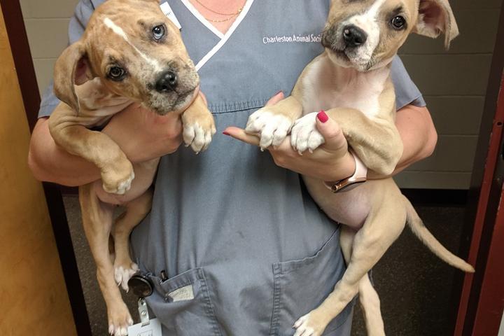 Pet Friendly Charleston Animal Society