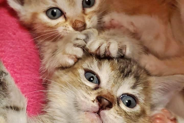 Pet Friendly Furkids Animal Rescue and Shelters Cat Shelter