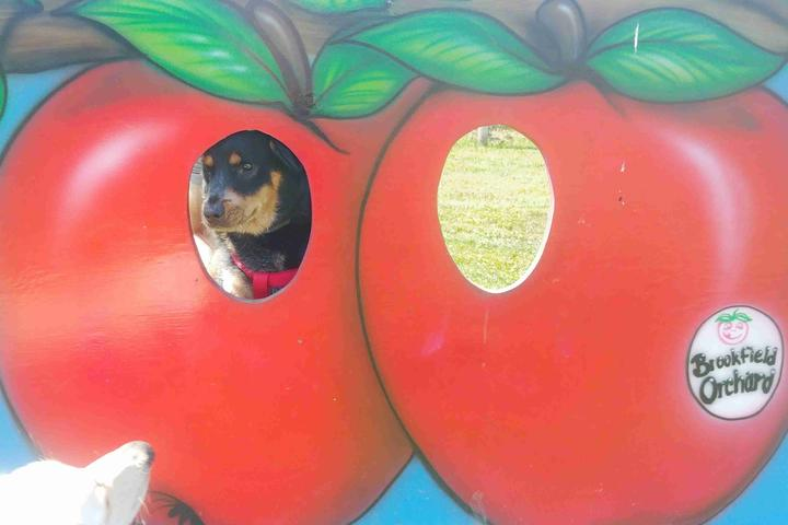 Pet Friendly Brookfield Orchards