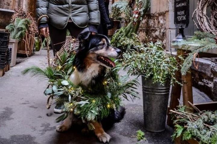Pet Friendly Maison Pepin