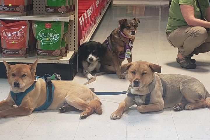 Pet Friendly Market Place Pet Supplies