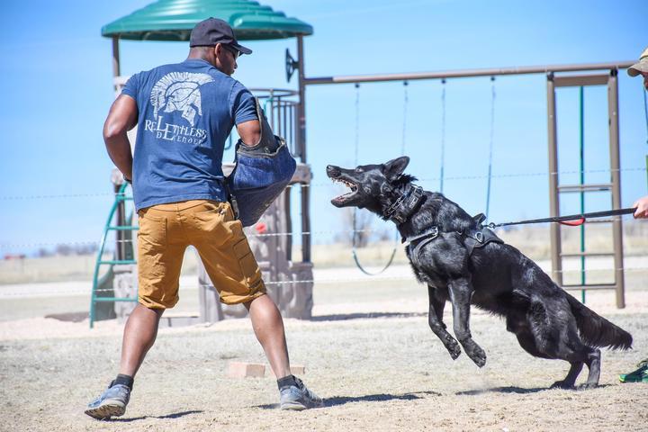 Pet Friendly MarathonK9 Academy