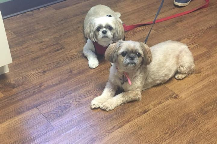 Pet Friendly Myers Animal Clinic Inc