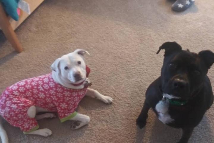 Pet Friendly ForPetSakes Dog Walking & Pet Sitting