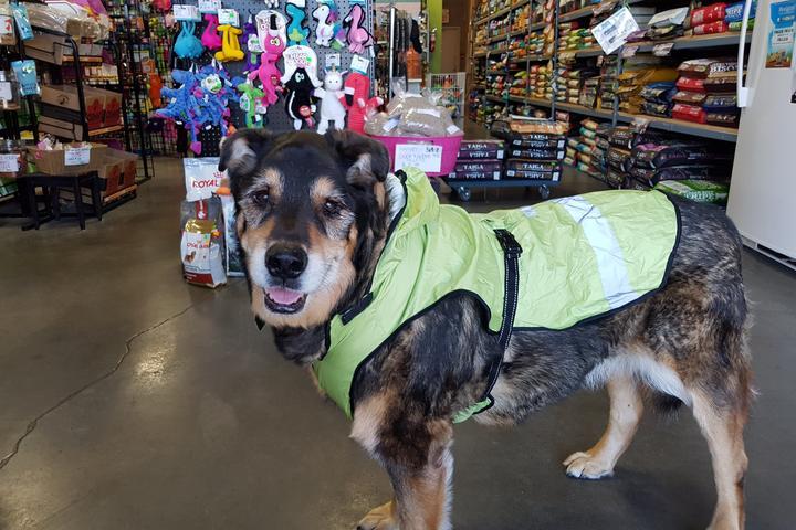 Pet Friendly Harvey Pet Foods & Supplies