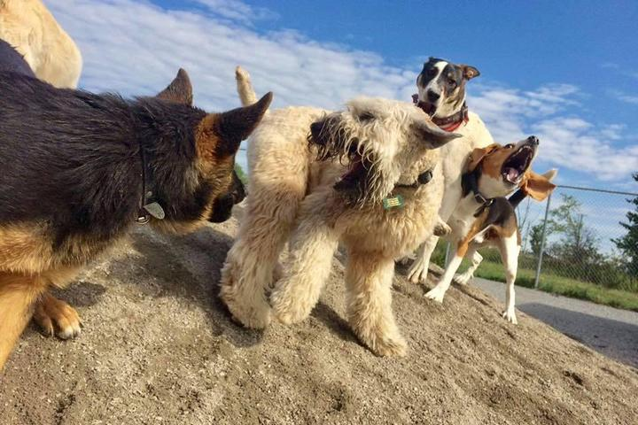 Pet Friendly Hotel la Grange Pension Canine